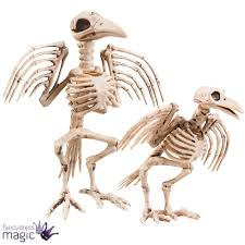 halloween horror scary large bone skeleton raven crow bird party