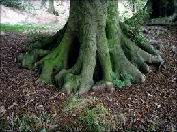 file tree roots geograph org uk 552037 jpg wikimedia commons