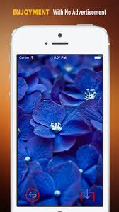 Blue Flower Backgrounds - beautiful blue flower wallpapers hd quotes backgrounds with art