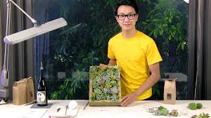 How To Make A Succulent Wall Garden by How To Make A Living Picture Frame With Succulents Youtube