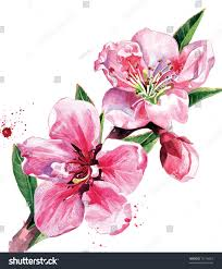 peach blossom branch stock illustration 72116623 shutterstock