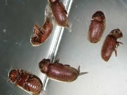 insecte de cuisine insectes47
