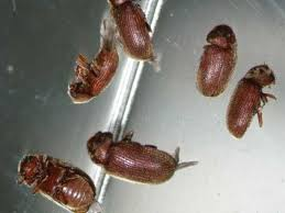 insectes dans la cuisine insectes47