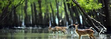 wildlife images Rishikesh wildlife tour rishikesh wildlife packages wildlife jpg