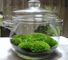 download moss for terrariums solidaria garden
