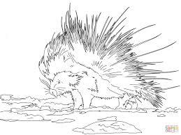 realistic lion coloring pages porcupines coloring pages free coloring pages