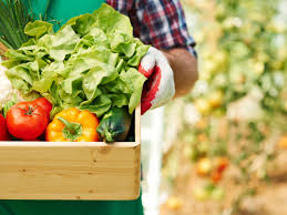 want to grow your own produce tips for beginning vegetable