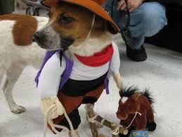pets in halloween costumes animals zone
