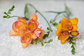 flower of the month hamifleurs flower of the month of february freesia news