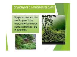 economic importance of bryophytes