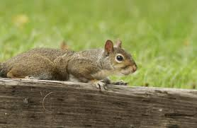 sharpen your skills with squirrels missouri department of