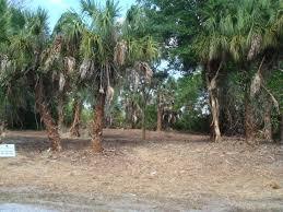 Florida vegetaion images Land clearing in punta gorda fl florida vegetation control jpg