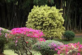 the royal botanical gardens of peradeniya sri lanka for 91 days
