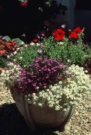 Fragrant Container Plants - 92 best scented gardens images on pinterest flower gardening