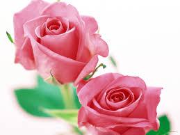 walppar madre wallpapers de rosas fondos de escritorio de rosas