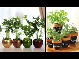 Plant Decoration For Home Living Room Decorate You Home With - Home decoration plants