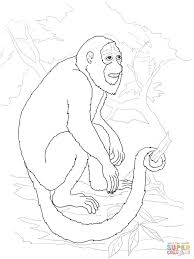 howler monkey coloring page free printable coloring pages