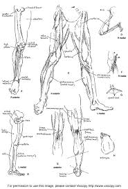 Human Figure Anatomy Drawing On Anatomy Art And Science Of The Human Body Anatomy