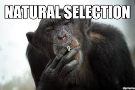 memes natural selection image memes at relatably com