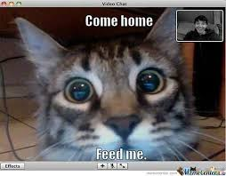 Chat Meme - when you re cat videochat you by andhy1001 meme center
