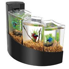 Home Aquarium by Fish Tank Fish Tank Imposing Image Design Gallon For Sale Tanks