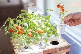 click and grow starter gardening kit provides you with micro
