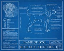 videos of bluetick coonhounds bluetick coonhound etsy