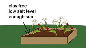 How Do Plants Get Diseases How To Identify And Treat Strawberry Diseases With Pictures
