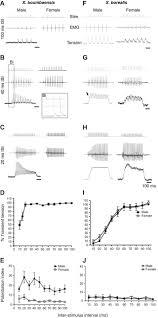 species specific loss of sexual dimorphism in vocal effectors