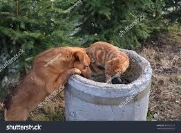 red cat brown dog playing around stock photo 587327519 shutterstock