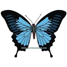 papilio ulysses butterfly vector crafts paper cutting