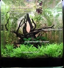 Aga Aquascaping Contest 77 Best Aqua Images On Pinterest Aqua Aquarium Fish And