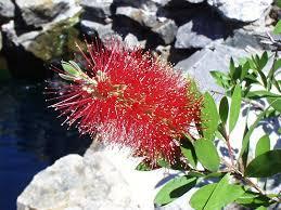 native australian ground cover plants australia plants a b c