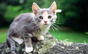 beautiful kittens world most beautiful kittens ever xcitefun net