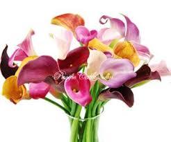 calla colors 20 best mini calla lilies images on calla lilies
