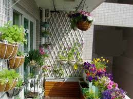 china balcony gardening boom triggers demand for liquid