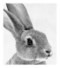 rabbit prints print 48 als premium poster lila x lola juniqe lovely