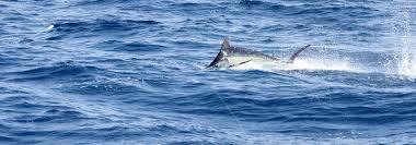 matagorda bay fishing charters and duck hunting port oconnor