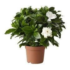 plante de chambre pour un bon sommeil une plante de dans votre chambre le