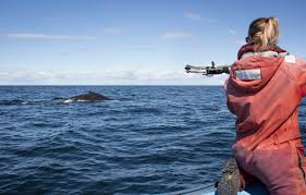 zodiacs and crossbows i spent a day chasing whales to learn how