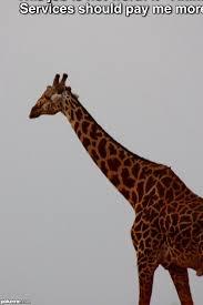 Giraffe Meme - pokeme meme generator find and create memes