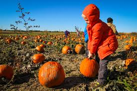 spirit halloween everett wa get in the halloween spirit with the best seattle area pumpkin picking