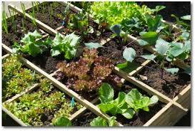 small vegetable garden plans and ideas