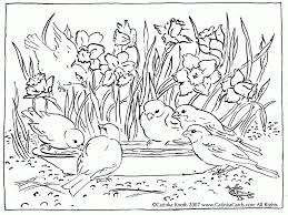 spring robin coloring pages coloring home