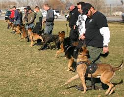 in service training u2013 k 9 program dps u2013 peace officer standards