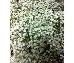 fleurs blanches mariage petites fleurs blanches bouquet la pilounette