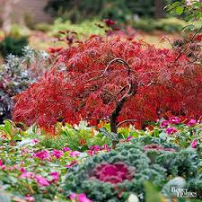 trees shrubs adding fall color yard
