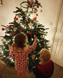 real christmas tree what is the best real christmas tree to go for christmas 2017