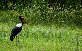 meet the colourful and comical birds of africa batteredpassport com