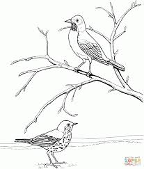 download coloring pages robin coloring pages robin hood coloring